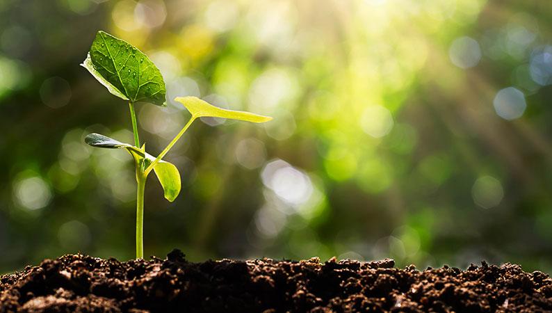 Dennemeyer's IP Quiz earns a €20,000 donation for global reforestation
